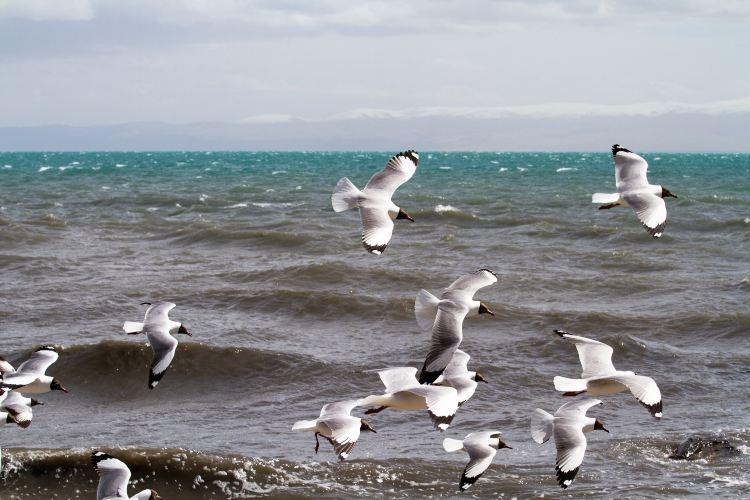 청해호새섬2