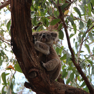 西澳大利亚游记图文-澳大利亚二月三十天之旅——珀斯+凯恩斯+布里斯班+艾尔利海滩+悉尼+墨尔本+塔斯马尼亚