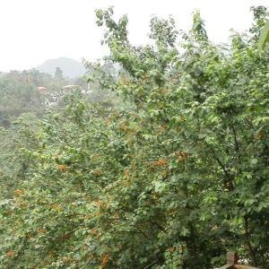 嘉竹绿茶园旅游景点攻略图