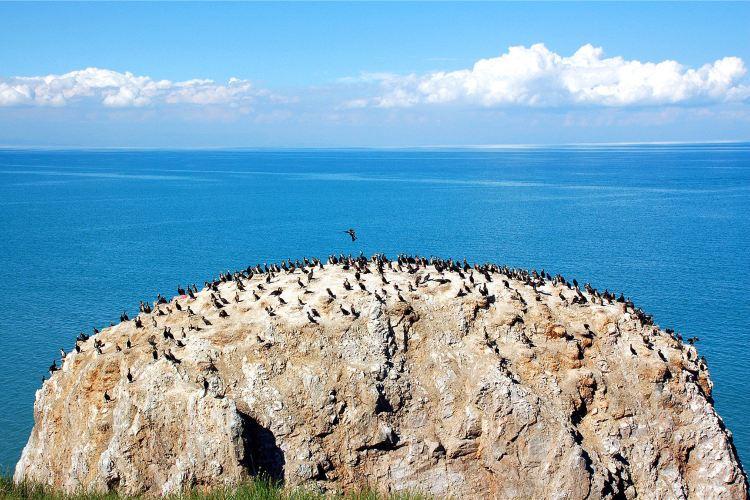 青海湖鳥島1