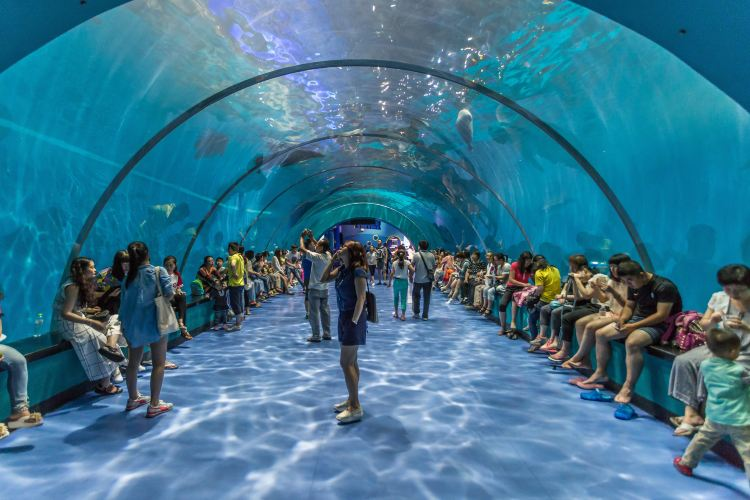 Qingdao Haichang Polar Ocean Park1