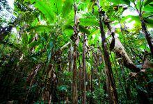 探秘热带雨林,西双版纳风情3日游