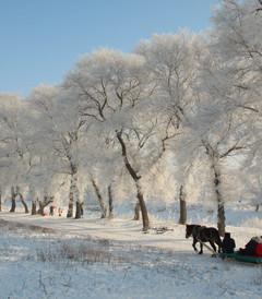 [哈尔滨游记图片] 东北10日游哈尔滨 亚布力 雪乡 长白山 雾凇岛 长春