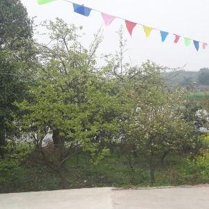 梨花溪旅游景点攻略图