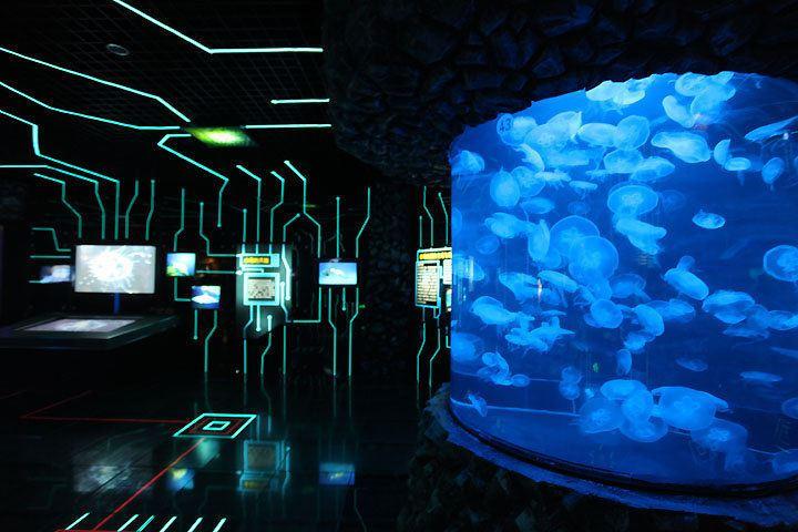 베이징 아쿠아리움(북경 해양관)3