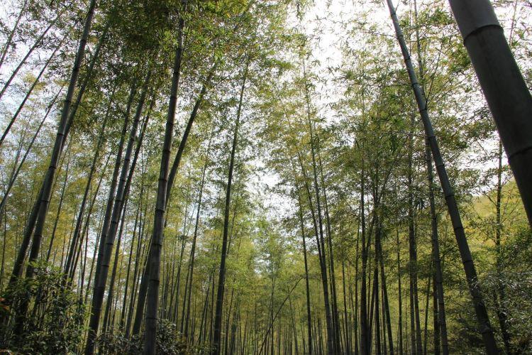 Nanshan Bamboo Sea2