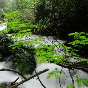恩施游记图文-北纬30度的森呼吸-恩施坪坝营洗肺之旅