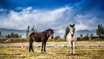 拉市海骑马