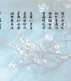 [苏州游记图片] 牛牛爱旅行 之 遇见江南 - 香雪海,那时好美