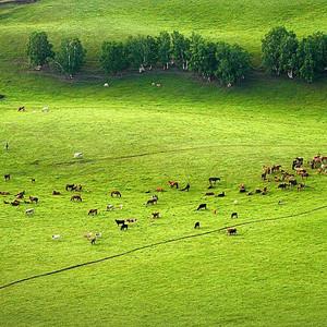 和县游记图文-内蒙古中南部兴和县自由行攻略游记