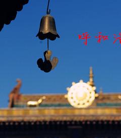 [呼和浩特游记图片] #新年#春节,内蒙一样玩翻天