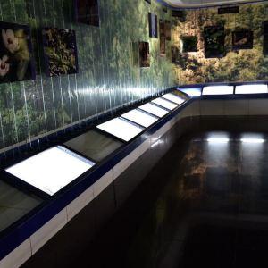 峨眉山博物馆旅游景点攻略图