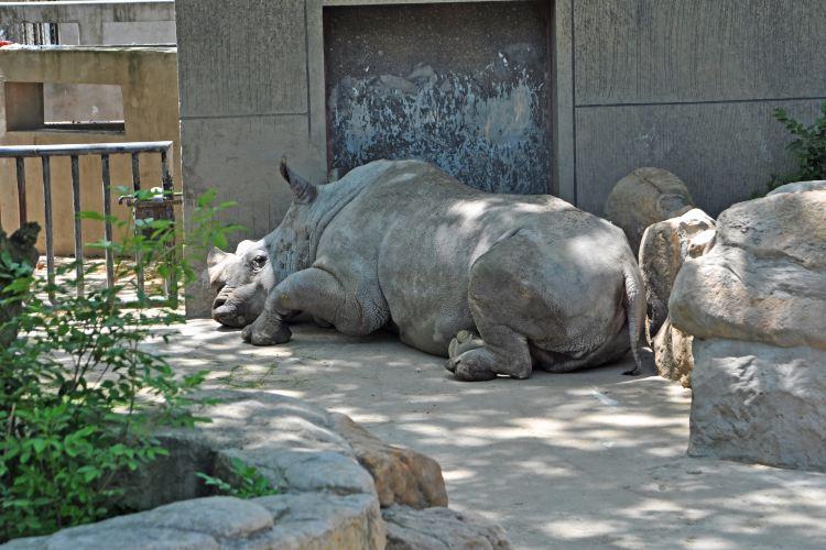 上海動物園4