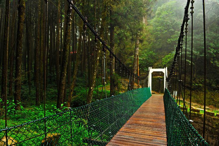아리산 국가 삼림 공원3