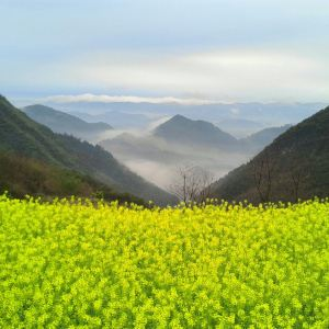 青山旅游景点攻略图