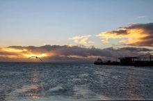 智利行3 D3,2104年3月6日 麦哲伦海峡、企鹅岛 多亏头天晚上逛街进一家旅游公司订好了今天上企
