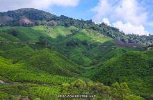 茶山、薰衣草园、草莓农场,金马伦高原的6个人气景点!