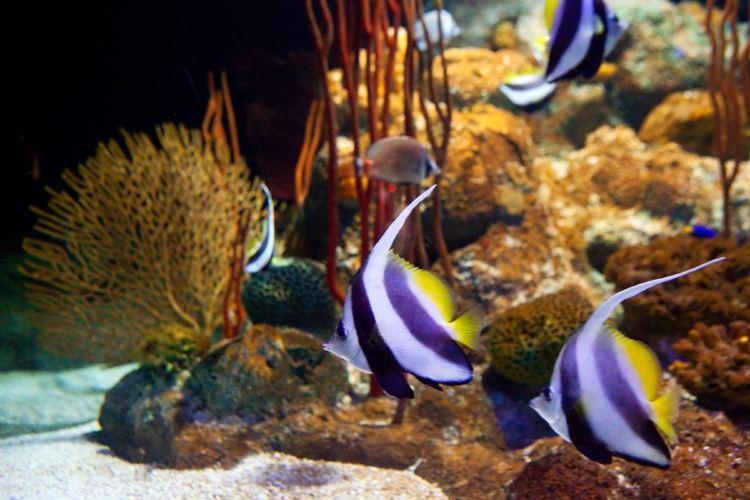 Underwater World Pattaya2