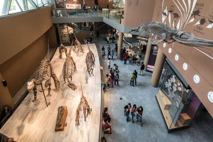 Shanghai Natural History Museum1