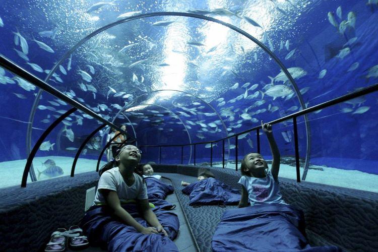 Shanghai Ocean Aquarium1
