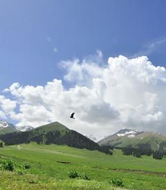 [乌苏游记图片] 新疆天山小环线+喀纳斯+天山天池12天游(7天自驾+2天包车)