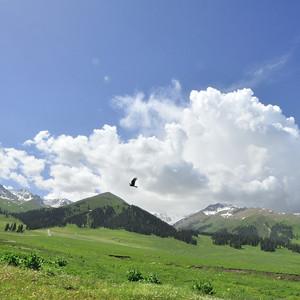 阿勒泰市游记图文-新疆天山小环线+喀纳斯+天山天池12天游(7天自驾+2天包车)