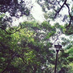 金山森林公园旅游景点攻略图