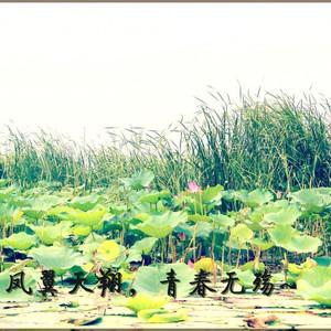 白洋淀游记图文-凤翼天翔,青春无殇 ---记八月白洋淀之旅