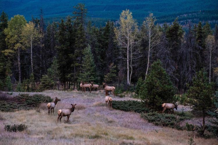 Jasper National Park4