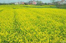 来桂林看油菜花 赏花大作战  告别了春节黄金周,初六的上午,背上简单的行囊,带着不一样的心情就出发了