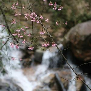 乐昌游记图文-春天已近了--莽山、韶关春节之旅