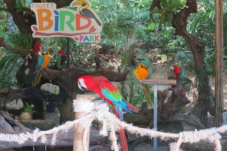 Phuket Bird Park3