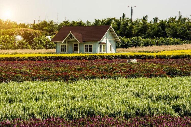 Million Sunflower Garden4