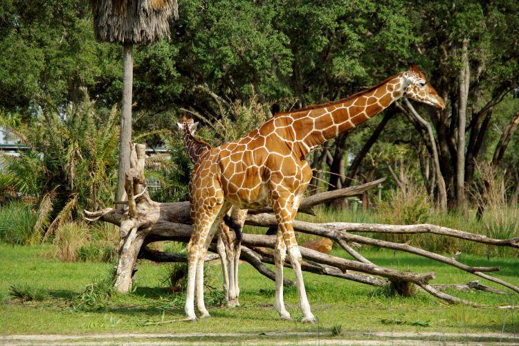 Disney Animal Kingdom3