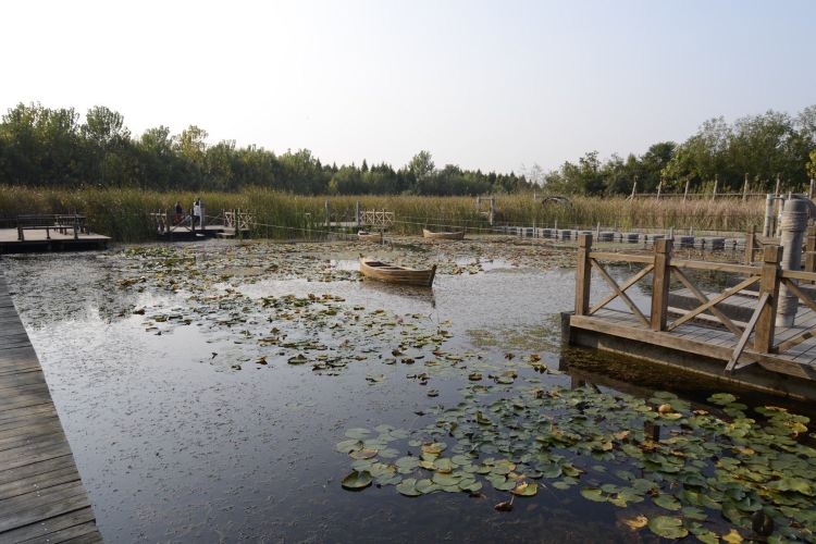 Qin Lake National Wetland Park1