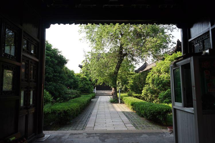 Viburnum Temple1
