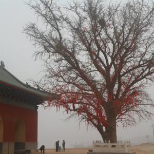 宜阳游记图文-洛阳宜阳灵山寺参访一日游攻略