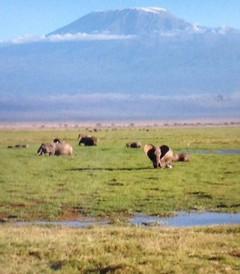 [坦桑尼亚游记图片] 一次坦桑行  一生坦桑情(连载五)