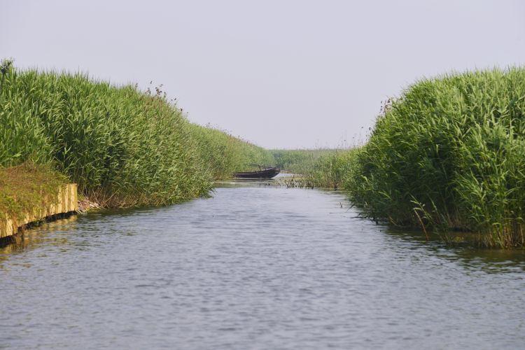 Baiyang Lake2
