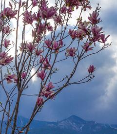 [黔西南游记图片] 八千里路云和月·川黔滇那些花开