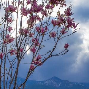 晴隆游记图文-八千里路云和月·川黔滇那些花开