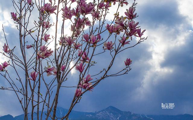 八千里路云和月·川黔滇那些花开