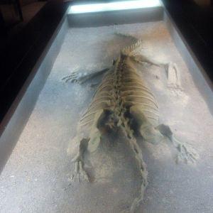 禄丰恐龙化石遗址旅游景点攻略图
