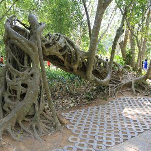 热带植物园旅游景点攻略图