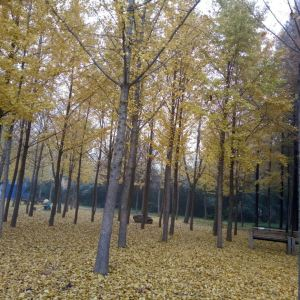 中原绿色庄园景区旅游景点攻略图