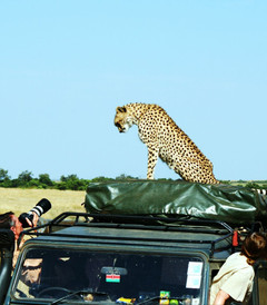 [肯尼亚游记图片] 这个夏天,去东非看动物王国的奥运盛会