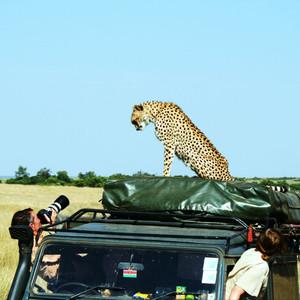 坦桑尼亚游记图文-这个夏天,去东非看动物王国的奥运盛会