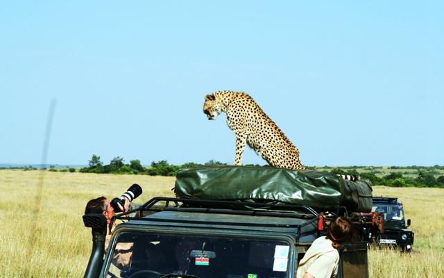 这个夏天,去东非看动物王国的奥运盛会