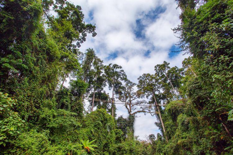 Xishuangbanna Tropical Rainforest National Park Wangtianshu Scenic Area2