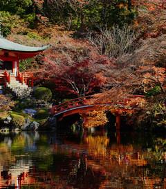 [京都游记图片] 春花秋叶看京都